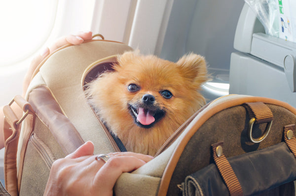 Traveling With Your Furry Friend
