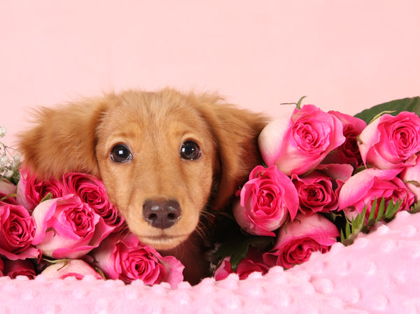 How to Pamper & Spoil Your Dog This Valentine's Day