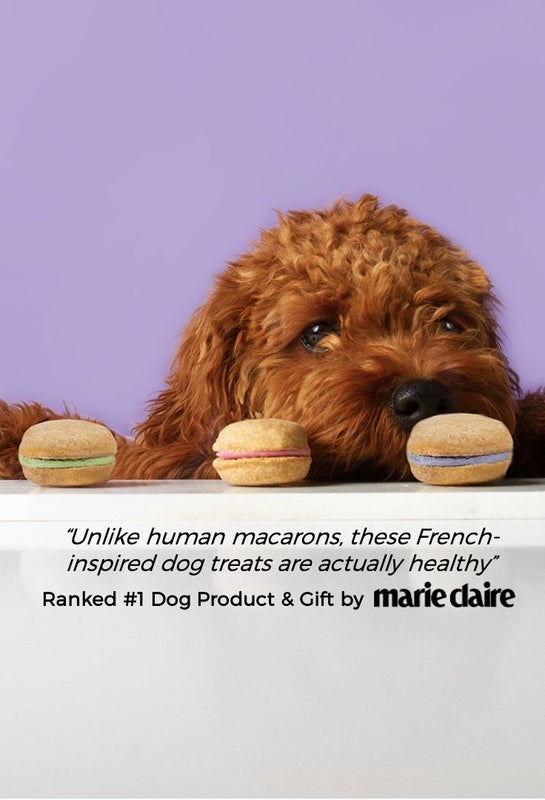 best dog treats gift Marie Claire all-natural handmade dog macarons dog birthday