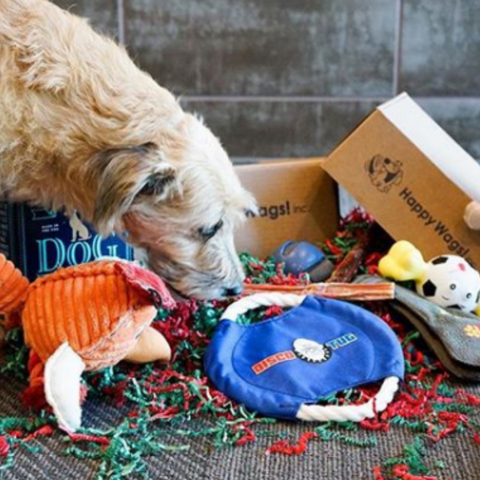 Happy Wags Dog Subscription Box
