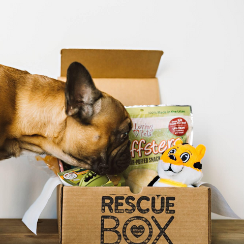 RescueBox Dog Subscription Box