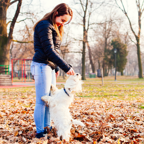 Woman and Dog in the fall