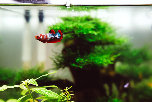 happy home for your fish