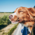Road Trip With a Dog: Tips, Tricks & FAQ's