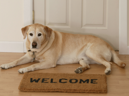 Large dog waiting for you to get home next to the welcome mat