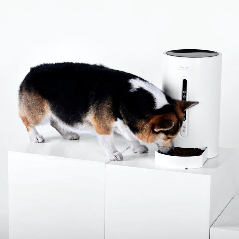 small dog eating from the Petmii Smart Pet Cat Dog Feeder
