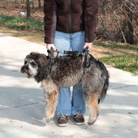 Solvit CareLift lifting harness on a large fluffy dog