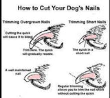 how to cut your dogs nails