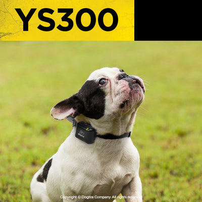 dogtra ys300 anti bark collar on a small white dog