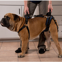 Solvit CareLift lifting harness on a medium sized brown dog