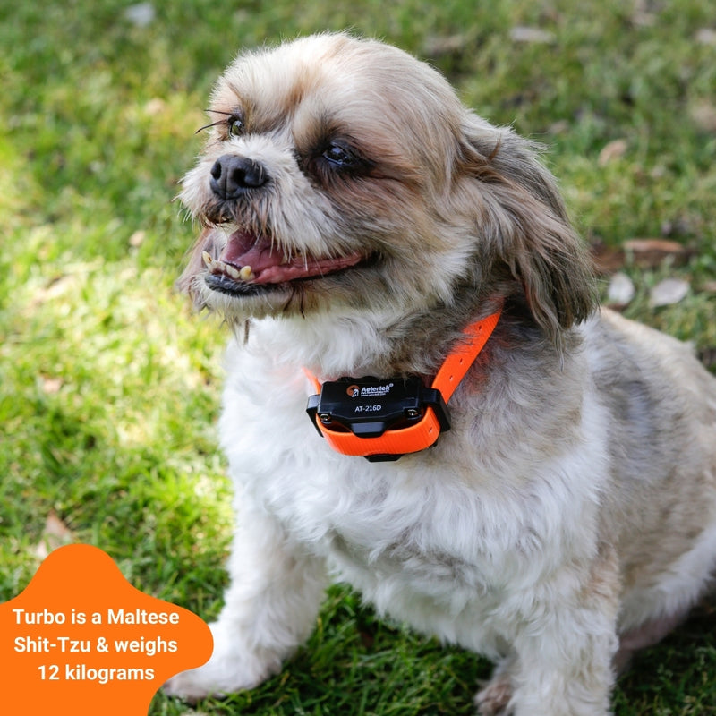aetertek training collar on a small to medium sized dog