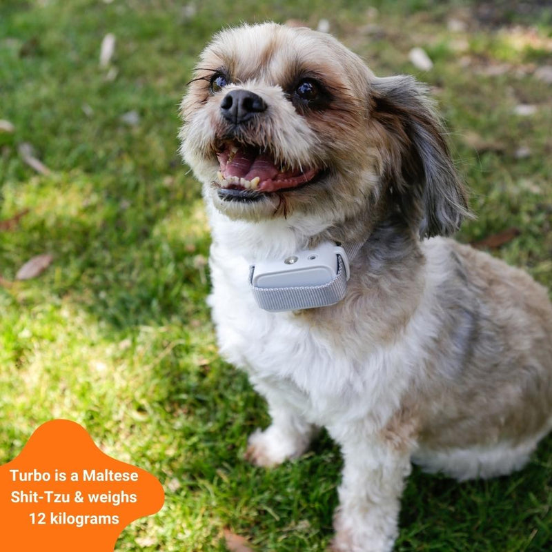 small dog in barktec citronella collar