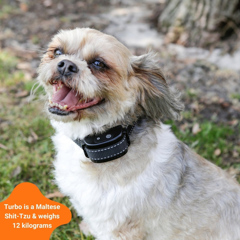 e-fence fencetec dog collar on a small-medium dog