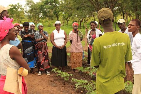 Forest protection in Northern Zimbabwe Ecologi