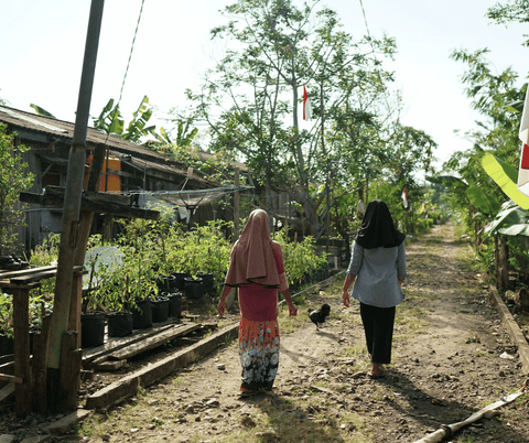 Peatland restoration and conservation in Indonesia