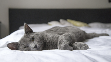 comfortable cat laying on bed
