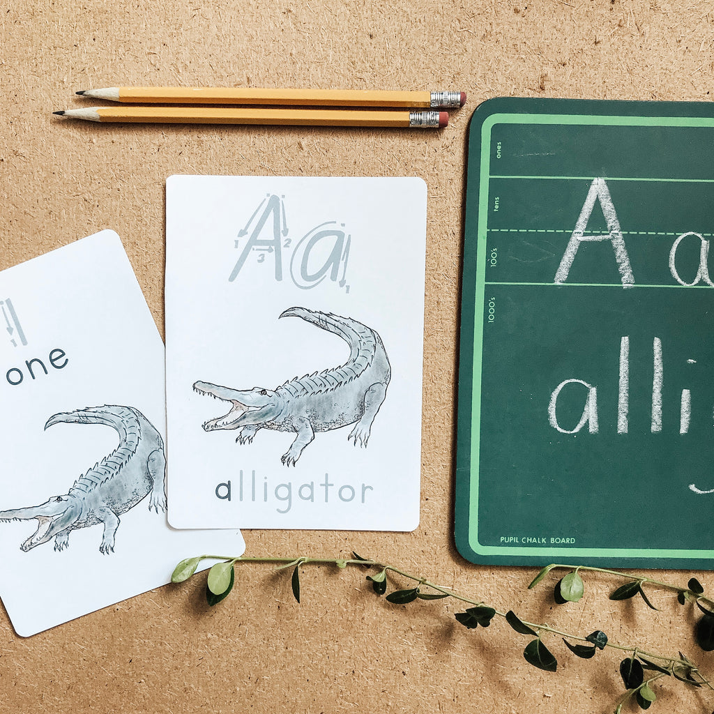 Animal ABC + 123 Flash Cards