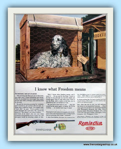 Remington Shotgun. Original Advert 1954 (ref AD8104)