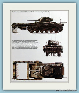 American/British Sherman Crab Mine-Clearing Flail Tank Print (ref PR495)