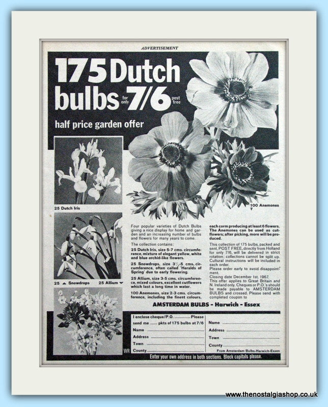175 Dutch Bulbs Original Advert 1967 (ref AD4912)