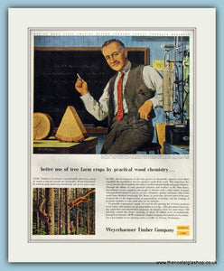 Weyerhaeuser Timber Company Original Advert 1954 (ref AD8279)