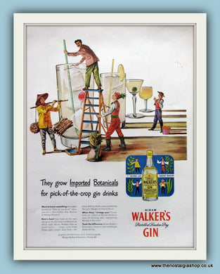 Walker's Gin. Original Advert 1950s (ref AD8186)