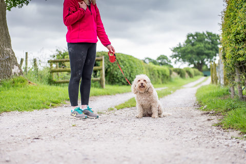 woman holding sitting white dog on a lead