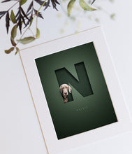 Load image into Gallery viewer, dark green picture design with a silver grey weimaraner looking out of the letter N that has a 3D cutout look and the dog's name is written in an elegant serif font underneath the N
