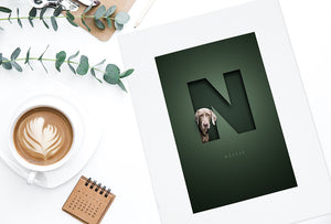 looking down on a desk with a bottle green picture with a silver grey weimaraner dog looking out of the letter N and her name in a classy font written below the cut out effect initial