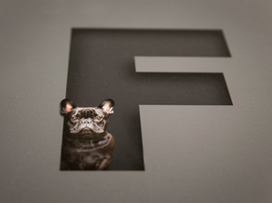 close up of a black french bulldog looking out of a paper cutout-effect letter F