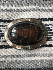 Huge Scorpion and Abalone Belt Buckle