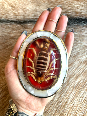 Large Red Mother-Of-Pearl Scorpion Belt Buckle