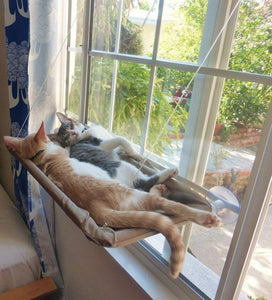 The Kitty Sun Bed