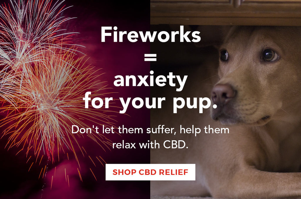 Are Fireworks Making Your Dog Anxious?