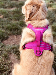 True Love Harness