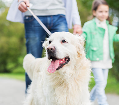 The benefits of walking a dog