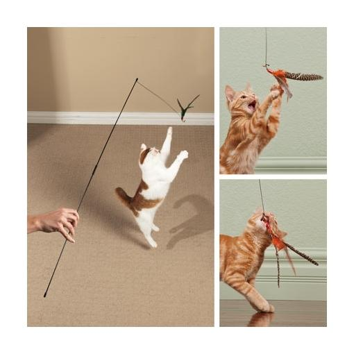 These are cats playing with the Pull Apart Cat Teaser Wand.with Turkey Feathers Cat Toys. One cat is brown and white and is leaping into the air to catch the turkey feather lure. The other cat is an orange tabby cat that is also playing with turkey feather lure.