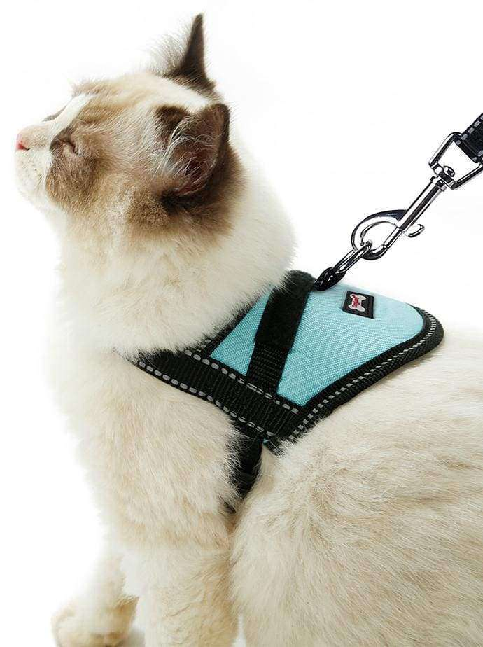 A cat is wearing a small Oxford Training Harness by DogLemi. It's for teaching cats how to go for walks. It's an excellent alternative to collars for pets with medical conditions such as collapsing trachea and more.
