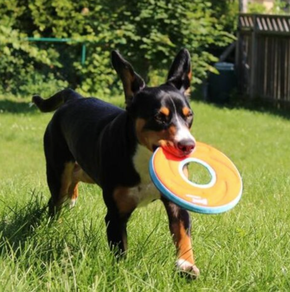 Chuckit!® Zipflight® Frisbee Disc Dog Toy - Easy to Clean