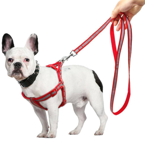 Reflective Dog Harness & Leash  Set - E-Topia, Sales on now!