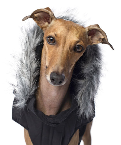Canada Pooch Everest Explorer Dog Jacket Dog Apparel Canada Pooch