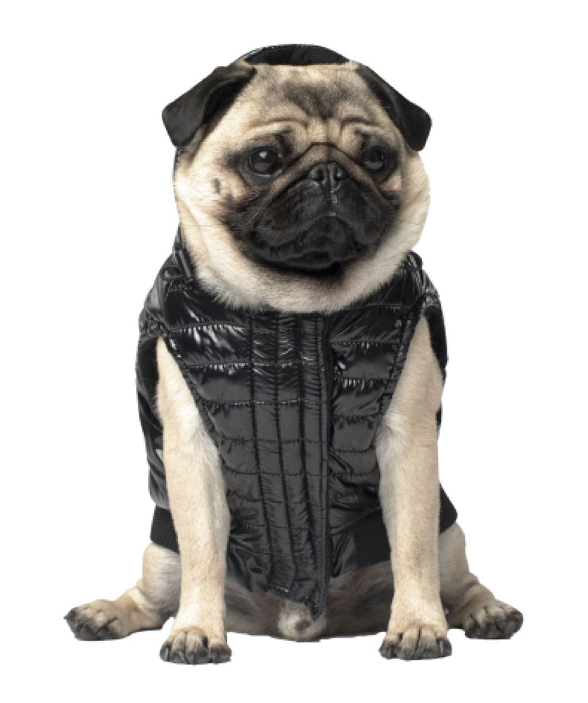 Canada Pooch Shiny Puffer Dog Vest (3 colors) Dog Apparel Canada Pooch 8 Black