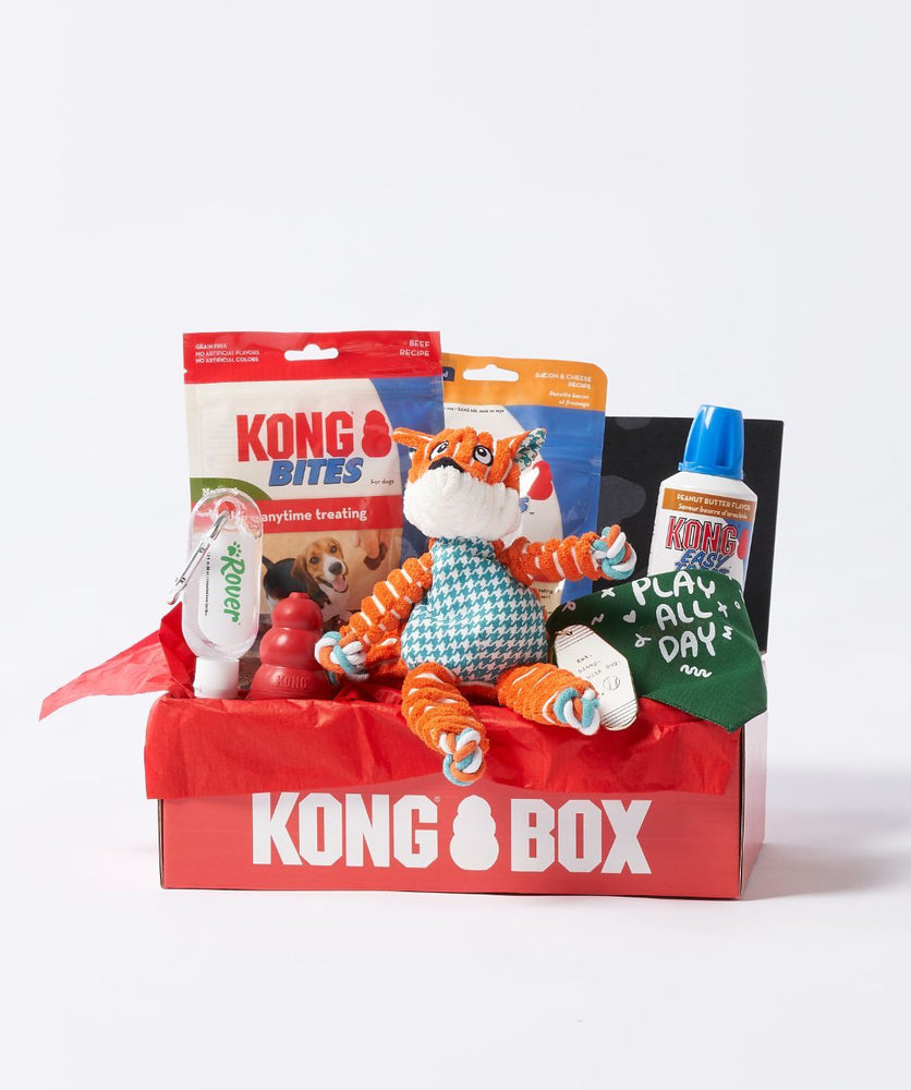 KONG® x Rover Fun Together Box (4 sizes)