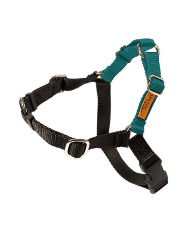 Wonder Walker™ Body Halter© Dog Harness (14 Colors) Harness Dolan's Dog Doo-Dads Toy Teal