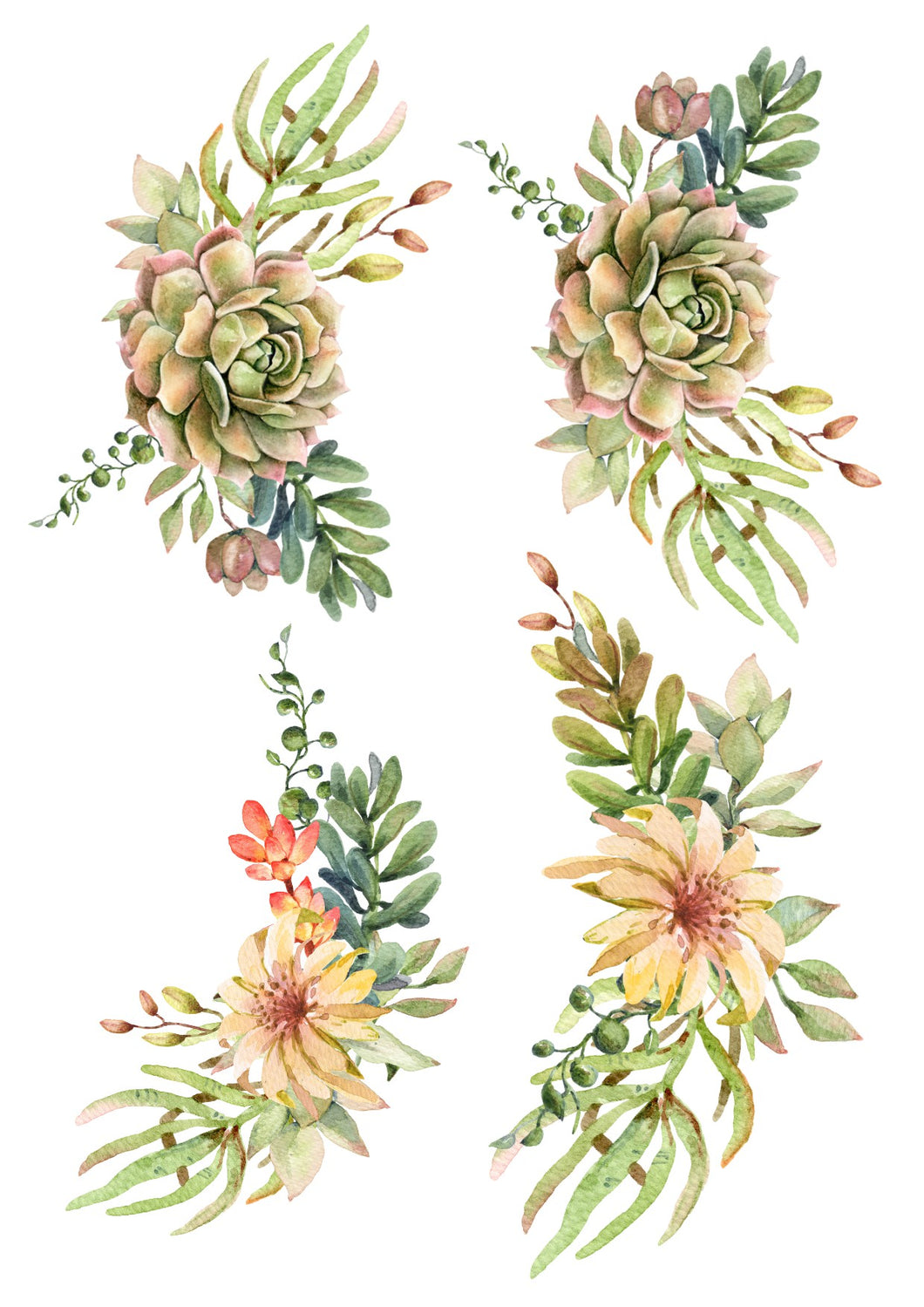 Green & Brown Succulents