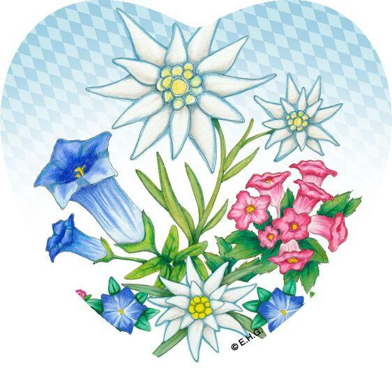 Magnetic Tile German Edelweiss - Collectibles, CT-220, CT-520, Edelweiss, German, Germany, Home & Garden, Kitchen Magnets, Magnet Tiles, Magnet Tiles-German, Magnet Tiles-Heart, Magnets-Refrigerator, PS- Oktoberfest Party Favors, PS-Party Favors, PS-Party Favors German, Top-GRMN-B