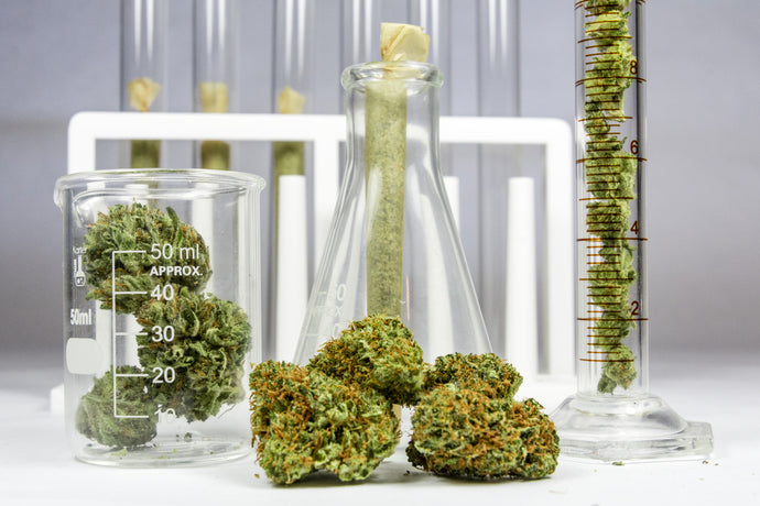 Cannabinoids 101: The Potential Benefits of Cannabis Beyond CBD and THC