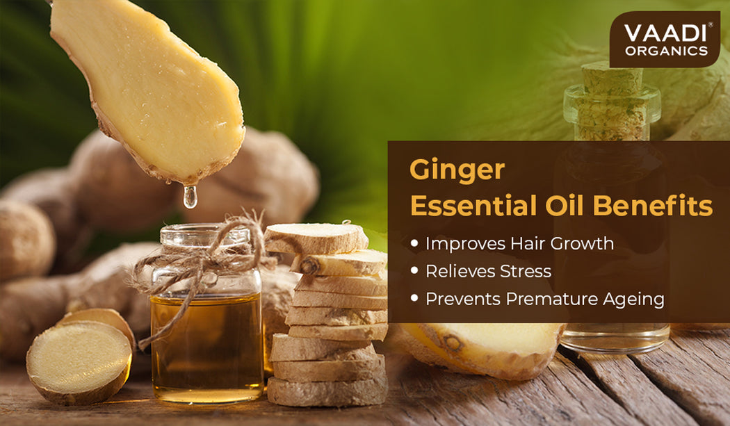 Organic Ginger Essential Oil - Tones Skin, Prevents Hairfall, Soothing Woody Aroma - 100% Pure Therapeutic Grade (10 ml/ 0.33 oz)