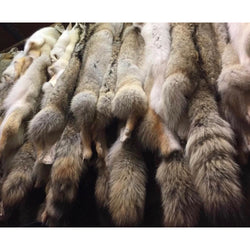 Coyote Fur Pelts - #2 Quality