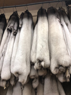 Blue Fox Fur Pelts